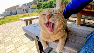 港近くの休憩所に寝ていた野良猫をナデナデしてきた