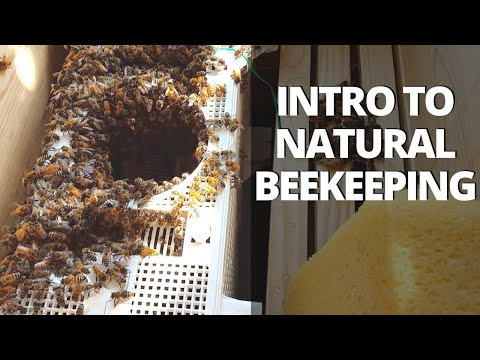 My First Bee Hive! (Foundationless) + Natural Beekeeping Info
