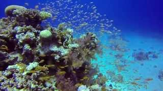 Diving in and around Dahab  2013 - GoPro 3 with Red filter