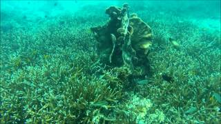Дайвинг самуи 2015(Diving Koh Samui 2015 with Dive Academy., 2015-03-17T11:00:35.000Z)