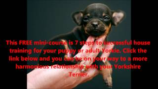 How To Potty Train A Yorkie Puppy- Free Mini-course Will Help You With Your New Yorkie Puppy