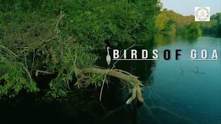 Birds Of Goa a wonderful short film by Forest Depa...