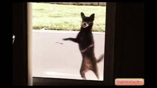 Смешные Животные HD