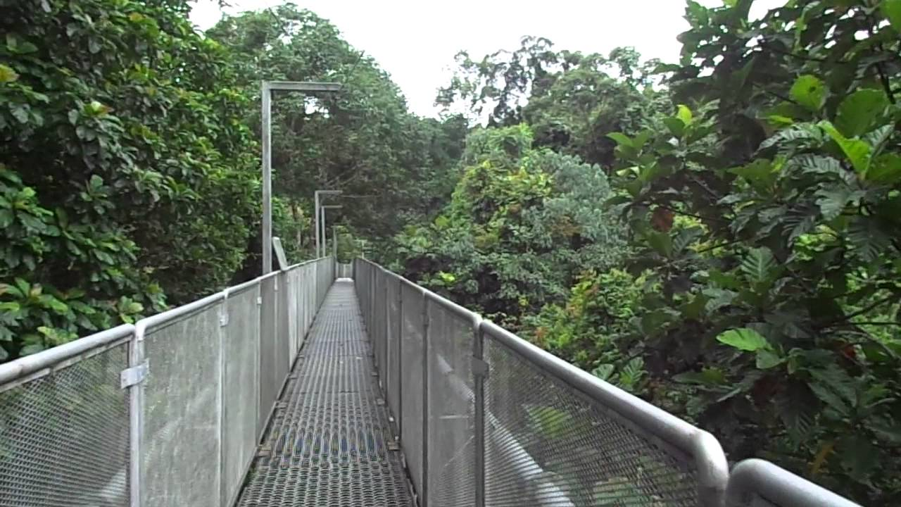 & The Tree Top Walk Sg. Sedim / Malaysia 1-7-2013 - YouTube