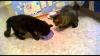 Kätzchen will nicht teilen