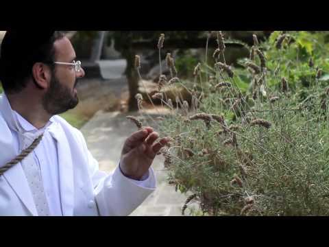שיר המעלות - יידל ורדיגר | Shir Hamaalot - Official music video by Yeedle