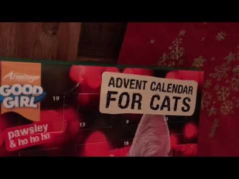 Leia the siberian cat - first advent calendar
