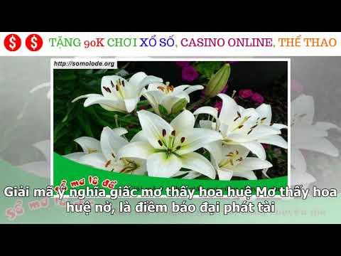 giải mã giấc mơ thấy hoa sen tại kqxsmb.info