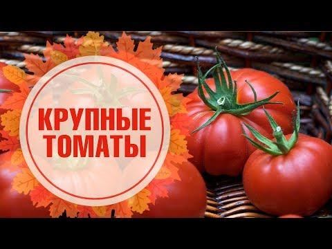 Крупноплодные томаты 🍅 СИБИРСКИЙ САД 🍅 Обзор сортов семян на Хитсад ТВ
