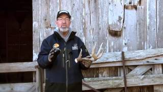 #ShedRally - When Do Bucks Shed Antlers? The Truth.