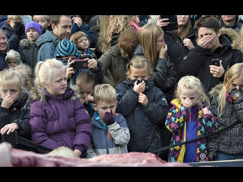 Danish zoo dissects lion in front of children