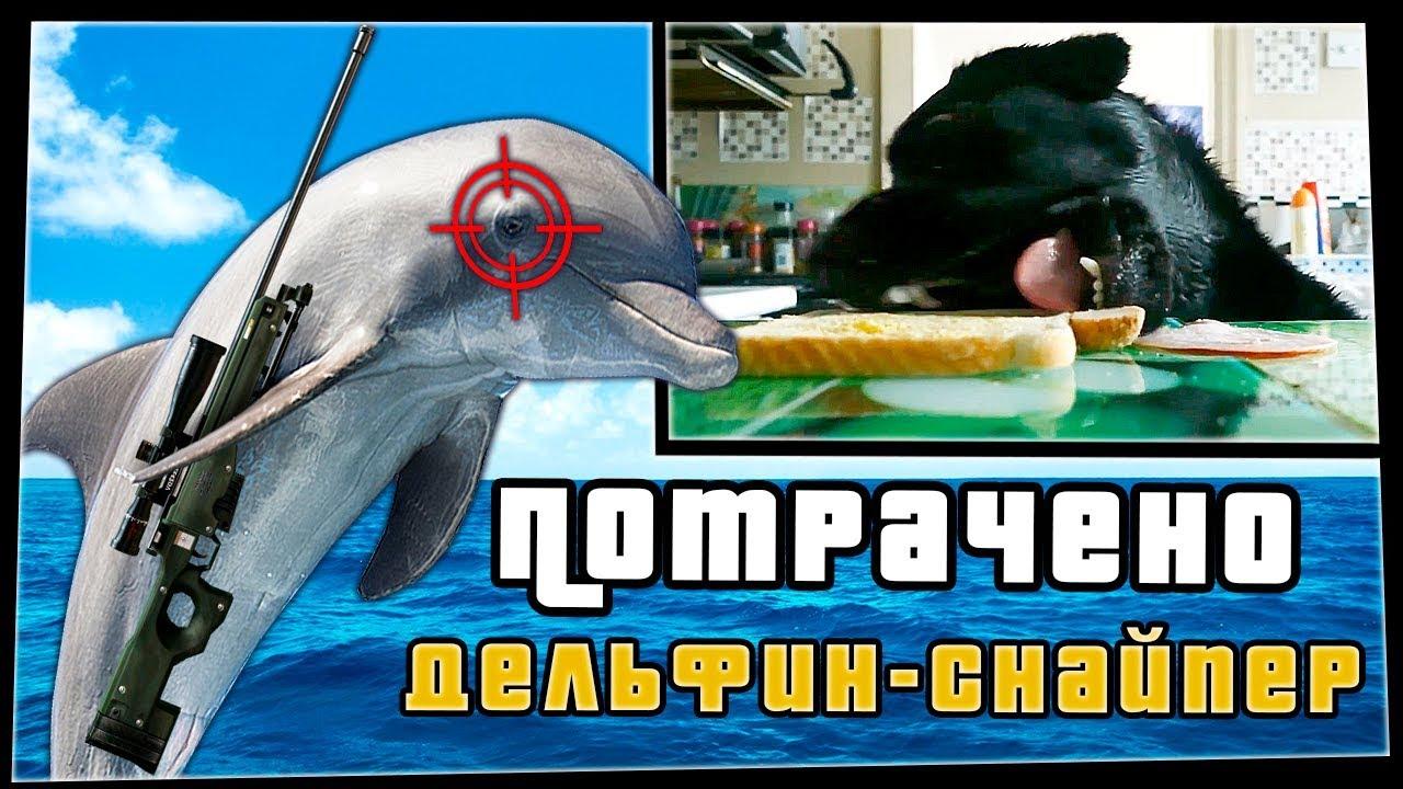 Дельфин-снайпер | ПОТРАЧЕНО
