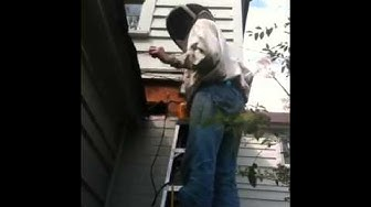 Honey Bee Removal Memphis TN 2 of 3