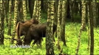 EDEN 2010 - The Biebrza Valley and Wetlands -- Wildlife Sanctuary (Poland)