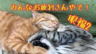 人を癒す術を心得てる猫2匹がかわいすぎるんです。 thumbnail