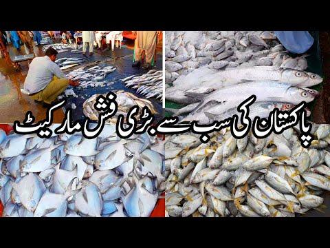 Karachi Fishery Market - Fish Harbour Karachi | کراچی فشریز