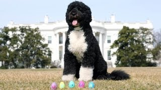 Repeat youtube video The 2013 Official White House Easter Eggs