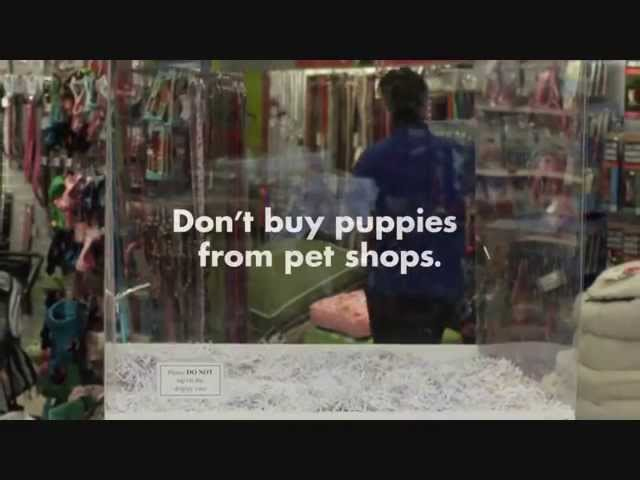 Don't buy puppies from pet shops