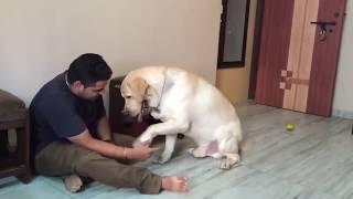 Award winning short film - Chaddi Buddy, Labrador short film