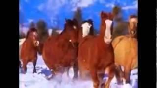 معظم الخيول الجميلة في العالم