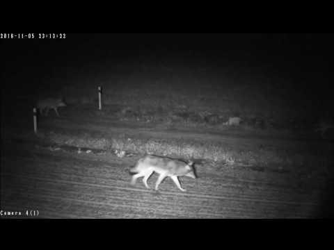 Забавное видео. Как животные нарушают границу?