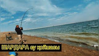 Шардара су қоймасы водохранилище шардара рыбалка 2021 Туркестанска область рыбалка с начевкой