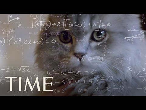 Cats Are Just As Smart As Dogs, Study Suggests | TIME