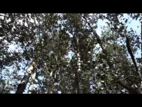 Norfolk Island Nature
