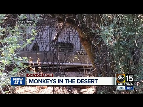 Monkeys still living in abandoned Mesa monkey farm?