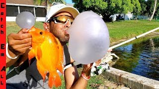 bubble-gum-catches-fish