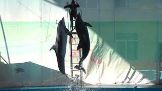 """Дельфинарий """"Морская звезда"""" в п.Лазаревское(Сочи).Шоу с дельфинами,моржом,белухами и морским львом."""