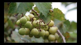 Bluefield Estate Winery 2017