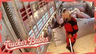Cindy beim Laden von Schweinen: Der Boden verhakt sich! | Trucker Babes | kabel eins