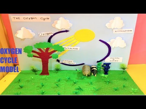 oxygen cycle model school project | 3D MODEL |  9TH CLASS | science exhibition