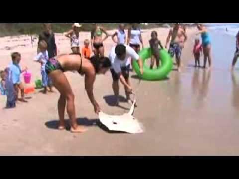 Coconut Point Stingray