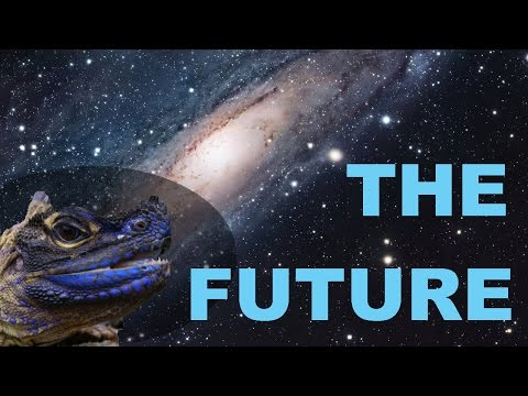 Q&A PT.2-The Channels Future, Dream Reptiles!!!