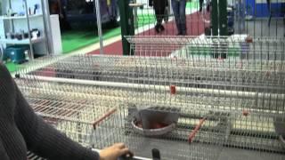 Клетка для промышленного содержания кроликов Contro Fratelli(, 2012-02-10T14:04:12.000Z)