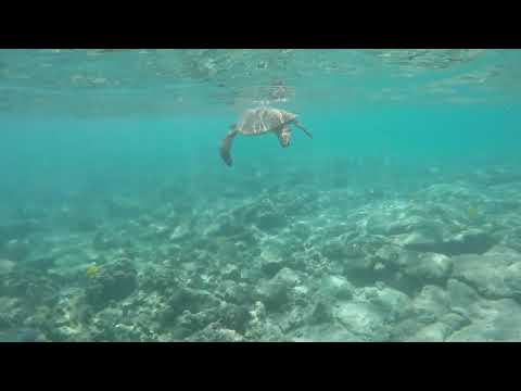 Swimming With Turtles in Kona at Kahalu'u Beach