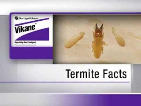 Pest & Termite Control in Los Angeles | Termites 101
