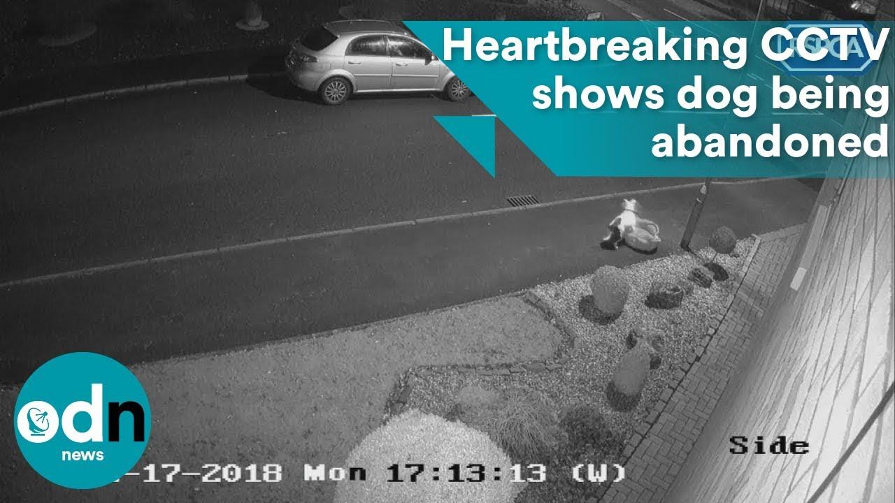 Суров сопственик го остава своето куче покрај патот и го напушта