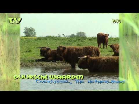 River IJssel - Duursche Waarden 1993  #01