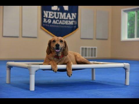 Delilah (Coonhund mix) Boot Camp Dog Training Video Demonstration