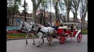 Türkiye'de Atlı Faytonlar Yasaklanmıyor Hayvanlar İşkenceyle Hayatını Kaybediyor