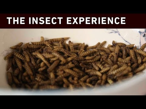 Gogga delight: Chef aims to convince CT insects are yummy