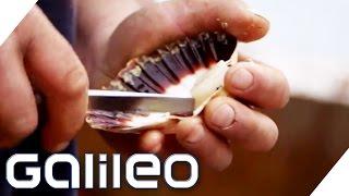 Der Weg der Jakobsmuschel | Galileo | ProSieben