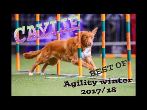 Agility Winter Best of 2017 & 2018 - Duck Toller Caylie
