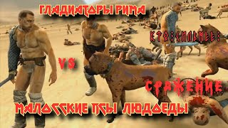 Боевые собаки людоеды против гладиаторов.
