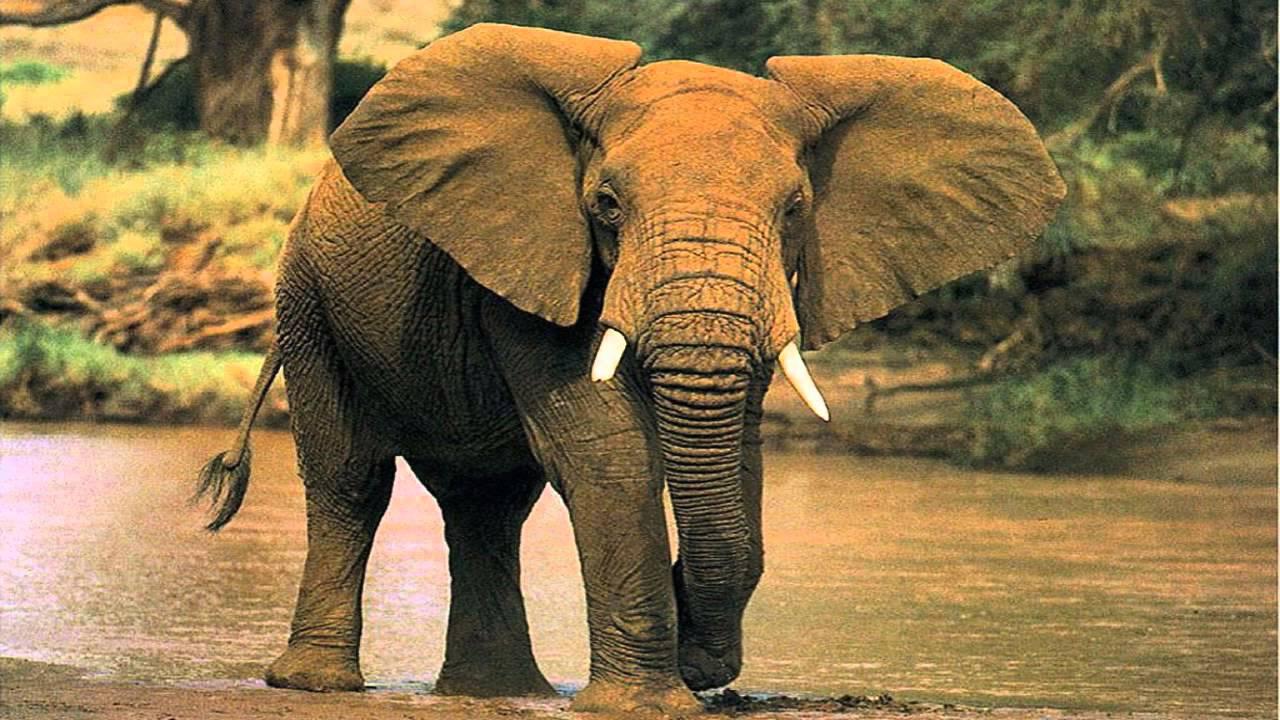 Significado De Soñar Con Elefantes Youtube