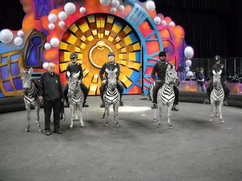 David Skipworth training five zebras to ride.