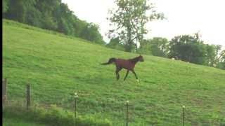 Born Wild - Sequel to The Soul of a Horse - Book Trailer